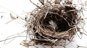 New Thinking on Empty Nests and Boomerang Kids