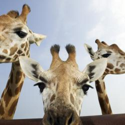 By boosting your creativity and cementing your connection with other creatures, a trip to the zoo can inspire healthy life change