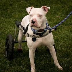 This special dog with special needs refused to give up. So did his owner